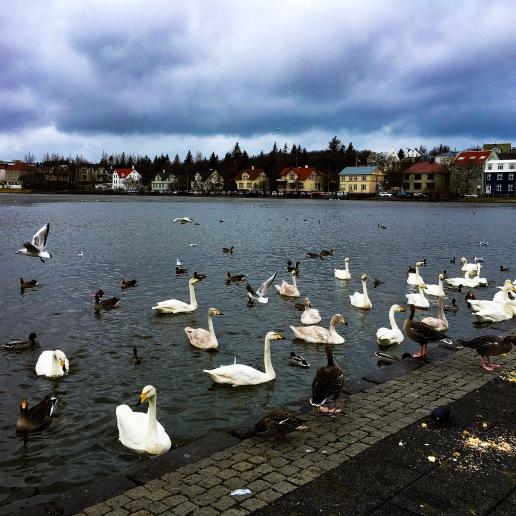 Tjörnin lake, Reykjavìk